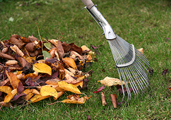 spring-fall-cleanup